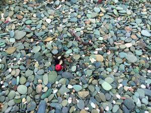 Stony beach and apple