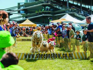 Hawkes Bay A and P show; sheep jumping