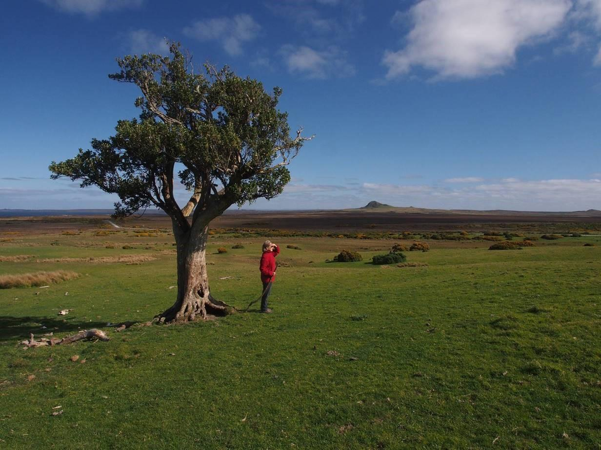 A volcanic cone and akeake tree across the peat flats. Karol is the 'shepherd'